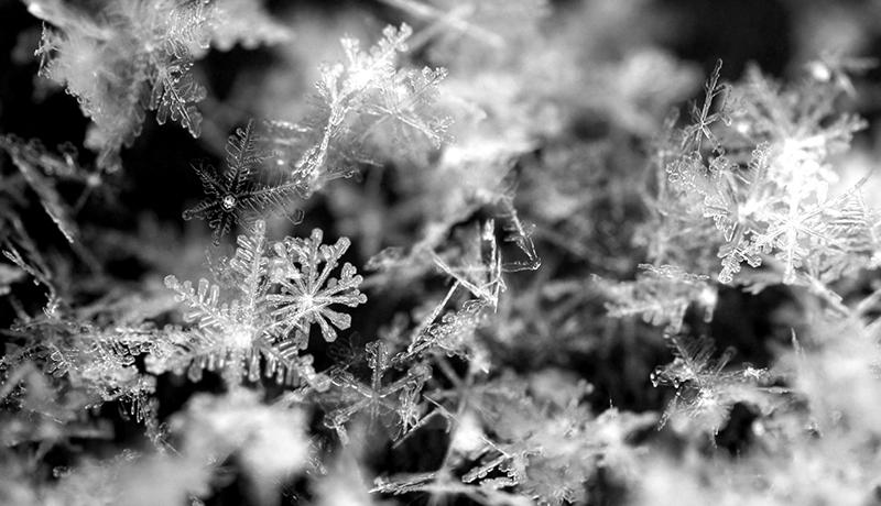 『雪』 世界で初めて雪の結晶を作った研究者