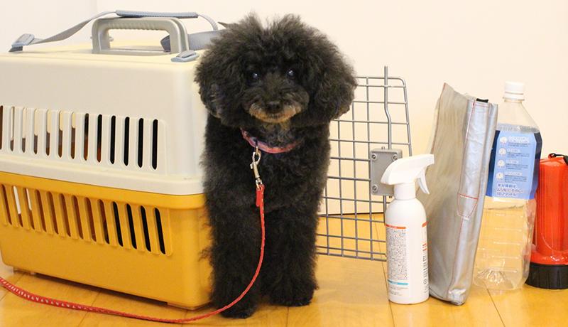 ペットのための防災対策、避難所の受け入れ体制に課題