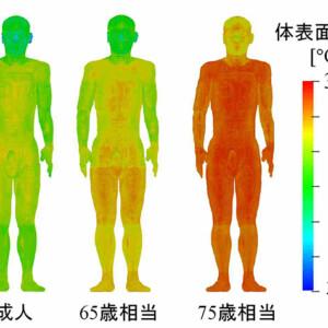 熱中症につながる高齢者の脱水症状 数日かけて蓄積 名工大が発症過程を分析